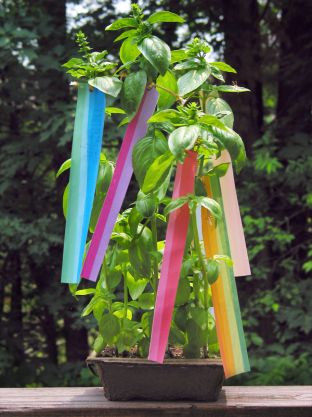 Making Wishes on a Star: Tanabata Basil Plant
