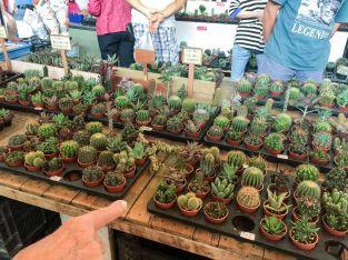 CactusPlants