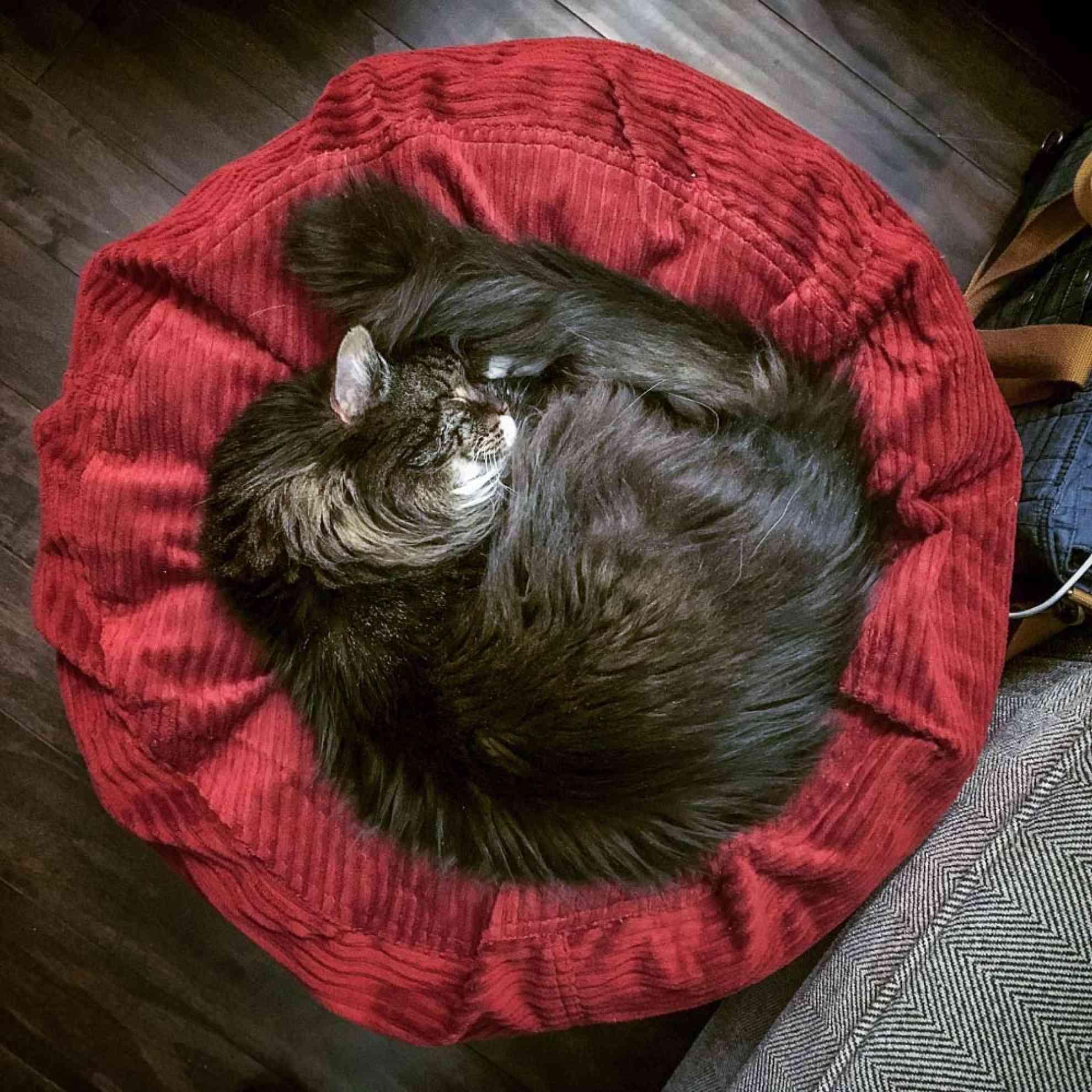 PerfectCatSleepingSpot