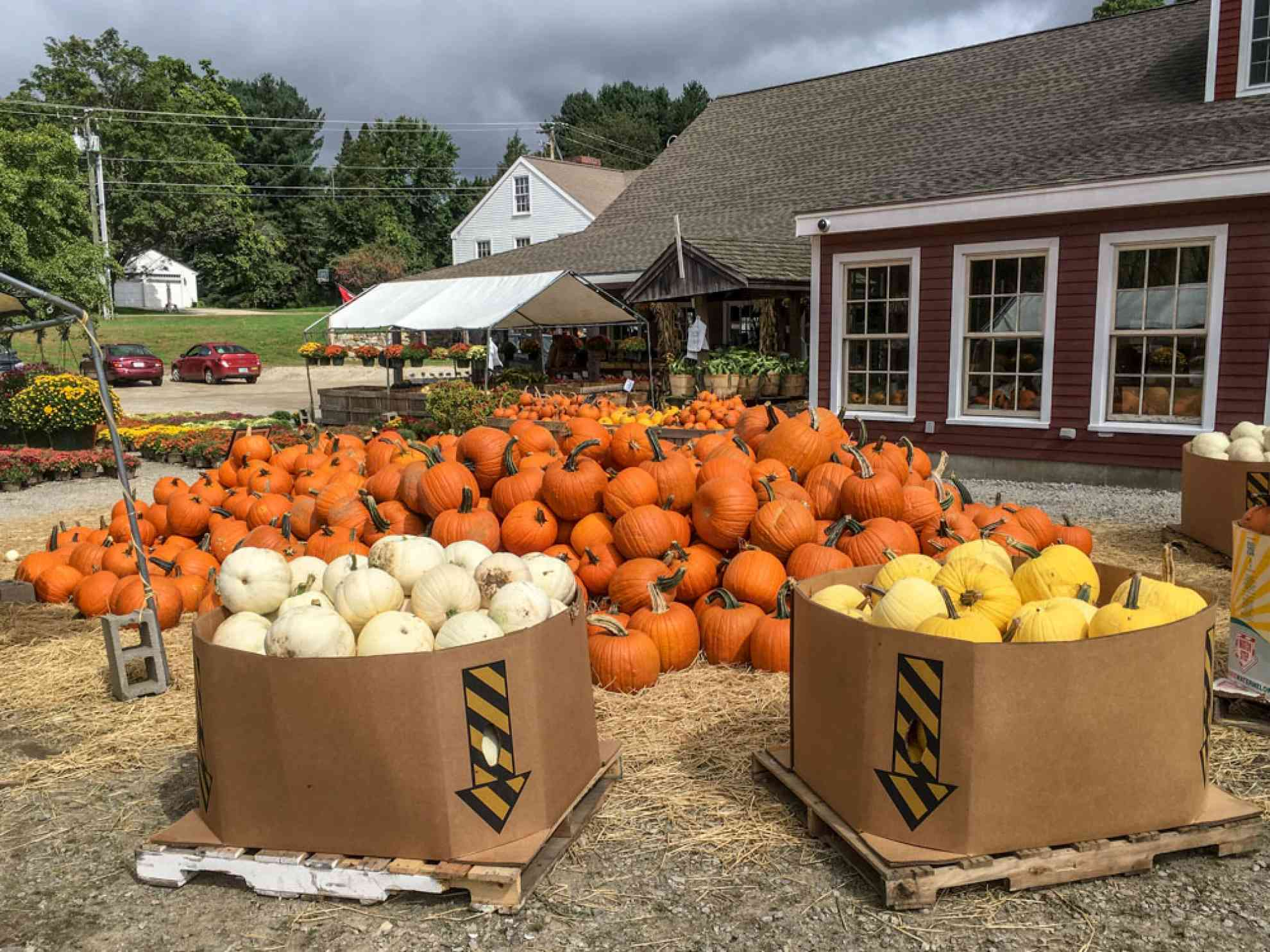 ChoosingPumpkins