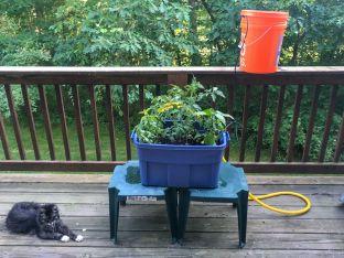 TomatoPlanterV4usinggravityfeed
