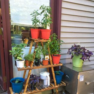 AGrowingPlantCollection