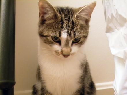 AudreyHepcat