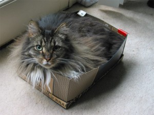 Kat In A Box